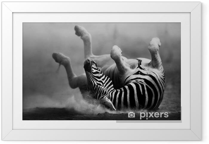 Plakat w ramie Zebra toczenia w pył - Tematy