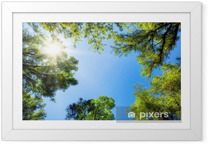 Plakat w ramie Drzewa oprawić słoneczne niebo - Przeznaczenia