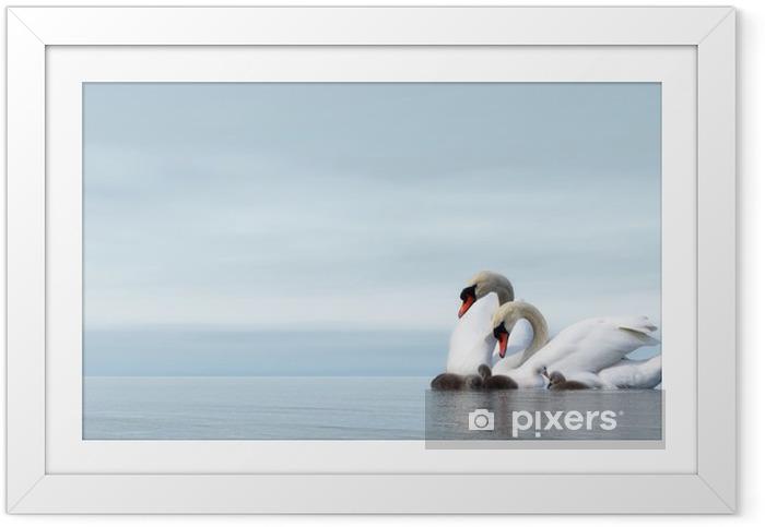 Ingelijste Poster Swan familie - 3D render - Zwanen