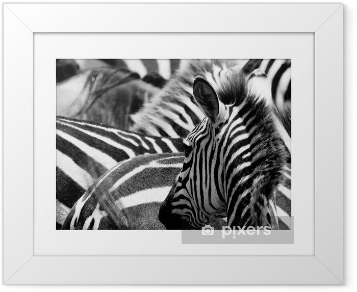 Plakat w ramie Wzór zebry - Tematy