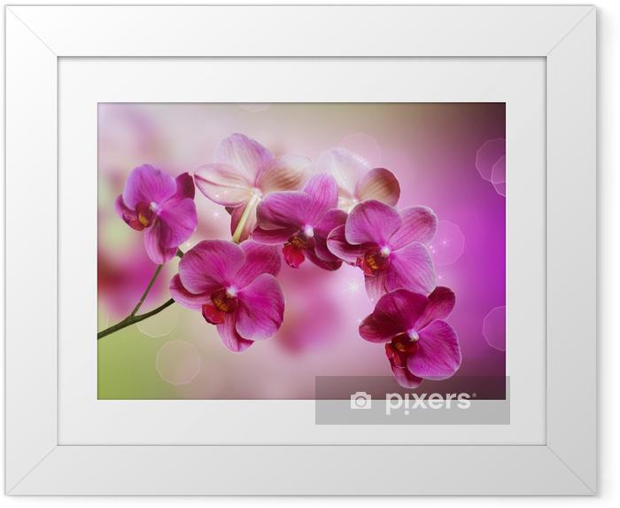 Póster com Moldura Orchid -