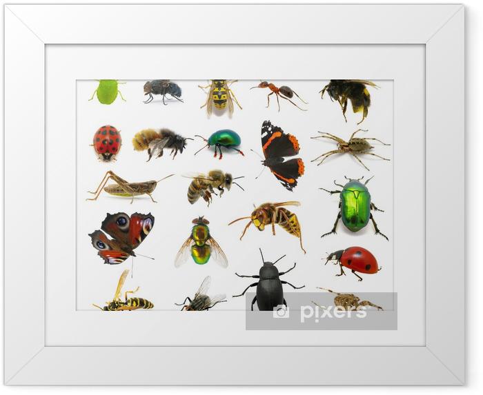 Ingelijste Poster Set van insecten - Andere Andere