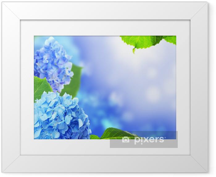 Póster Enmarcado Flores de hortensias hermosas en un fondo azul. - Flores