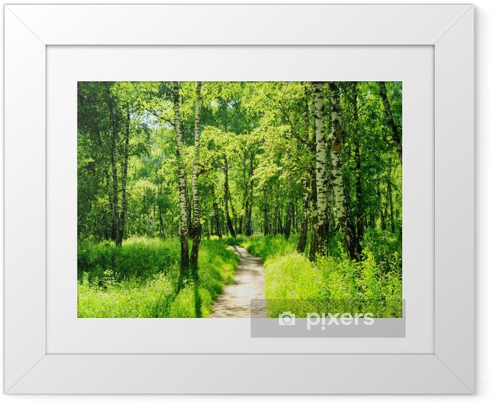 Póster Enmarcado Bosque del abedul en un día soleado. Bosque verde en verano - Bosque