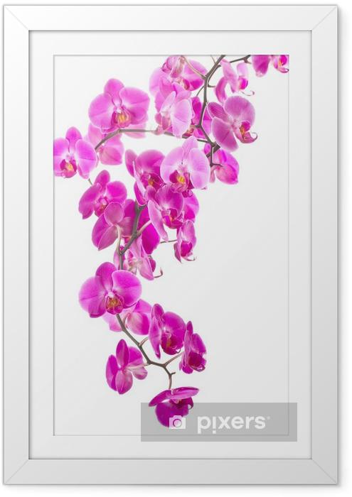 Póster com Moldura pink flowers orchid - Decalque de parede