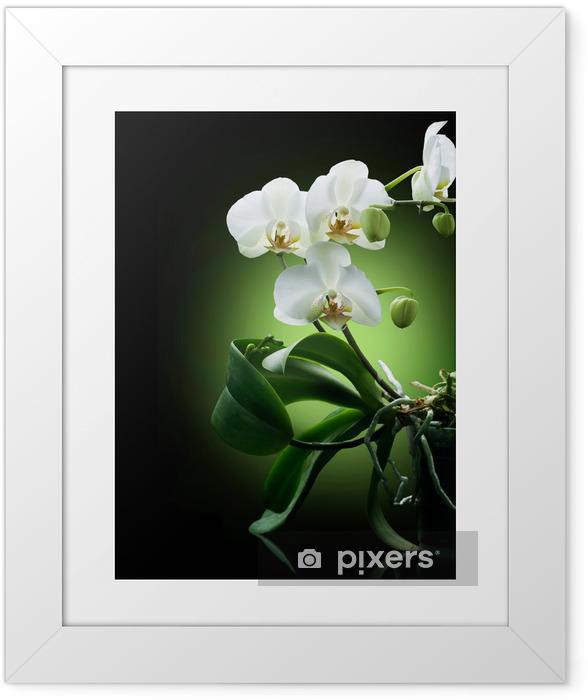 Póster com Moldura Beautiful White Orchid isolated on black - Temas