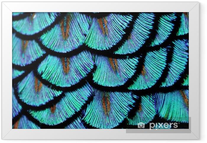 Ingelijste Poster Blauwe veren - Dieren