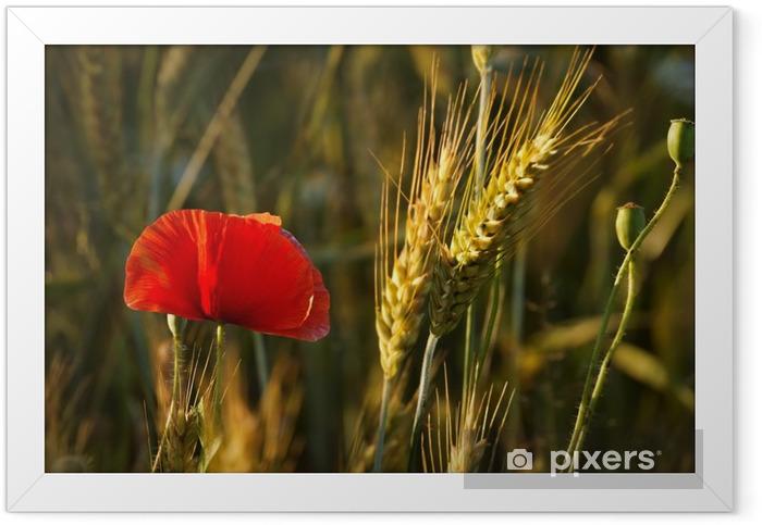 Ingelijste Poster Veld en oren van graan papaver - Bloemen en Planten