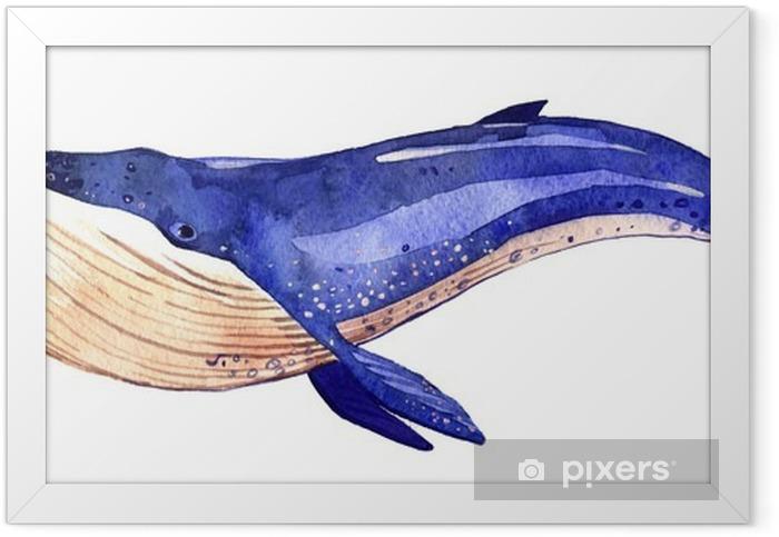 Vesiväri valas, käsinmaalattu kuva eristetty valkoisella pohjalla Kehystetty juliste - Eläimet