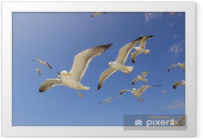 Ingelijste Poster Möwe zeemeeuw auf texel - Vogels