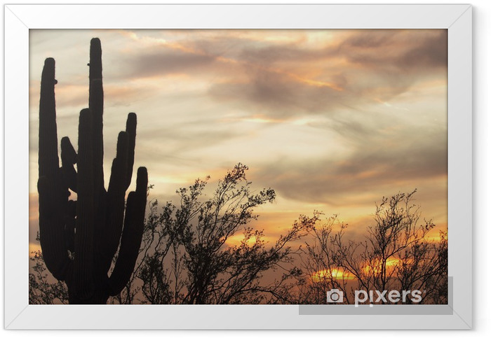 Poster i Ram Sunset Cactus - Amerika