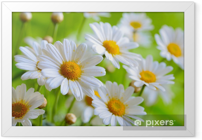 Póster Enmarcado Naure poder - Flores