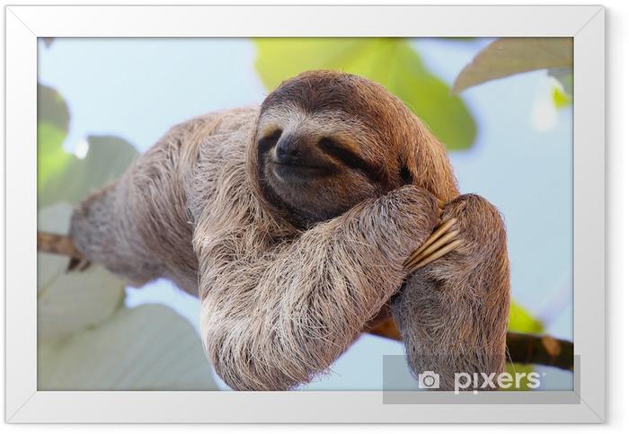 Ingelijste Poster Sloth - Zoogdieren