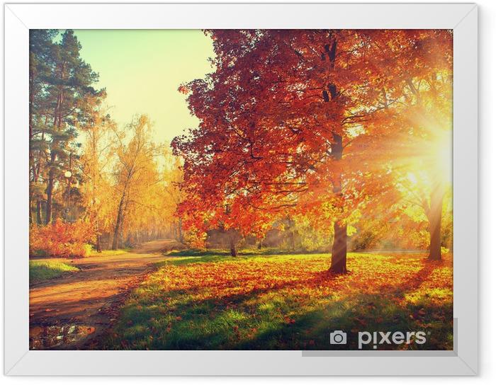 Plakat w ramie Drzewa w jesiennym świetle - Tematy