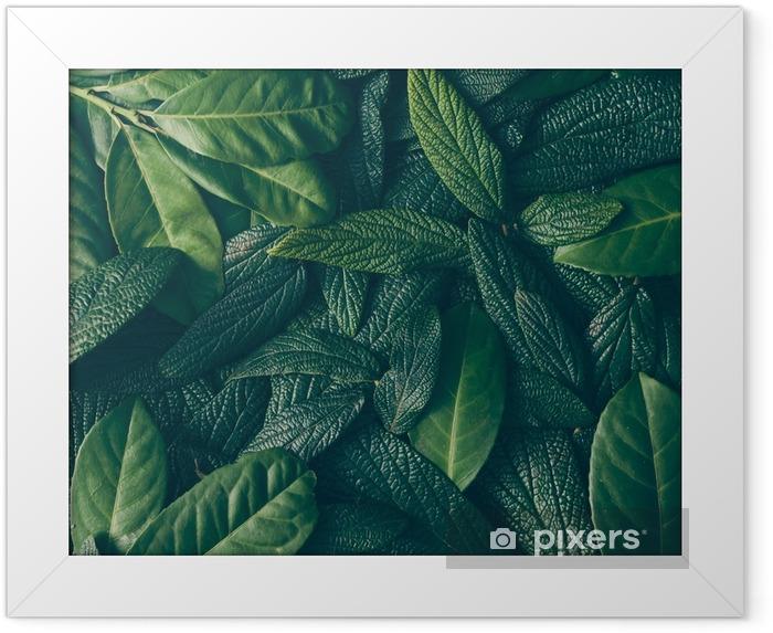 Plakat w ramie Kreatywny układ wykonany z zielonych liści. płaskie lay. koncepcja przyrody - Rośliny i kwiaty