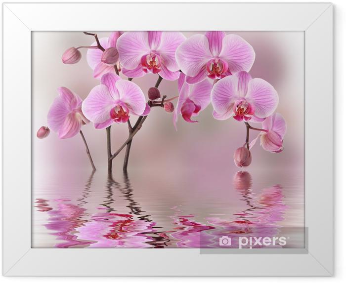 Póster com Moldura Pink orchids with water reflexion - Temas