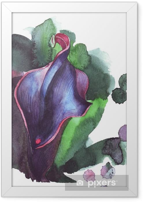 Plakat w ramie Kwiat kalii Akwarele ilustracji - Rośliny i kwiaty