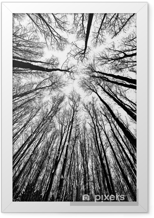 Plakat w ramie Białe i czarne sylwetki drzew - Style