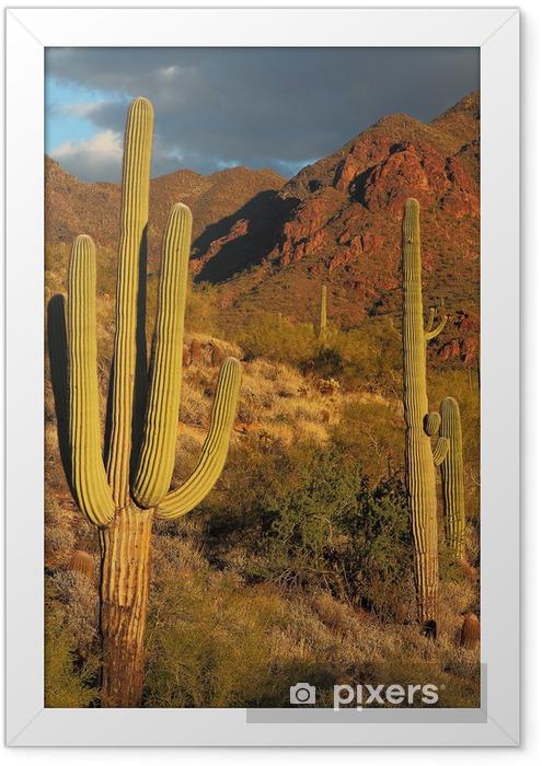 Poster i Ram Sonoran ökenlandskap och kaktus detaljer - Öknar
