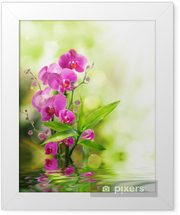 Póster com Moldura beautiful orchid and bamboo for border treatment spa on water - Temas