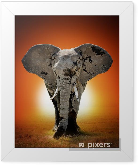 Poster en cadre Éléphant - Thèmes