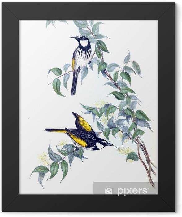 Illustration of bird. Framed Poster - Animals