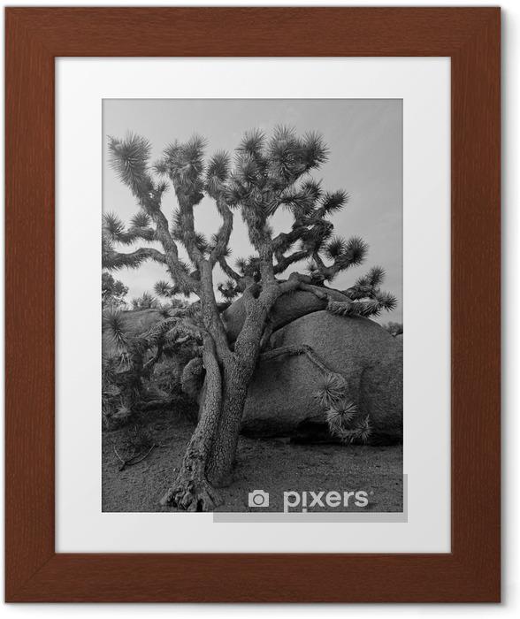 Poster en cadre Joshua tree - Amérique