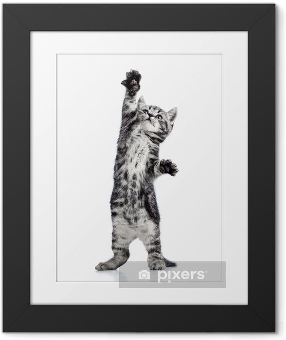 Plakat w ramie Figlarny kociak kot na białym tle - Tematy