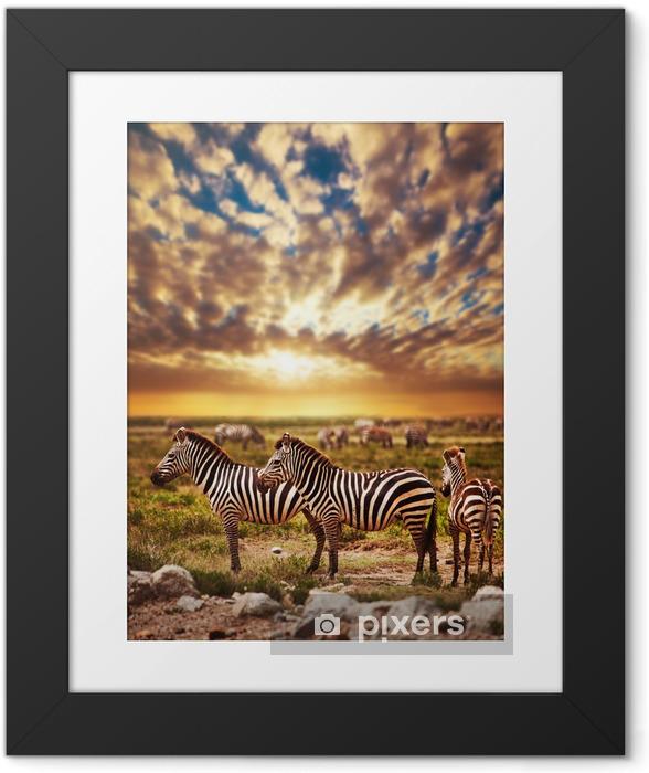 Plakat w ramie Zebry afrykańskiej sawanny stado na zachodzie słońca. safari w Serengeti - Style
