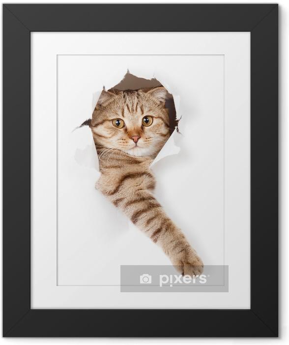 Poster en cadre Chat dans le trou de papier peint -