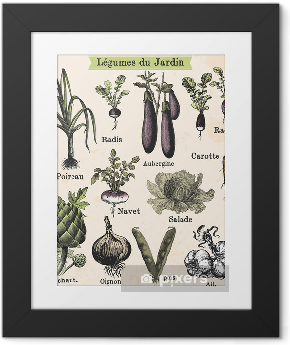 Ingelijste Poster Tuin groenten - Stijlen