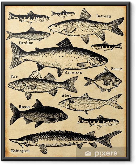 Póster com Moldura poissons - Vida aquática e marinha
