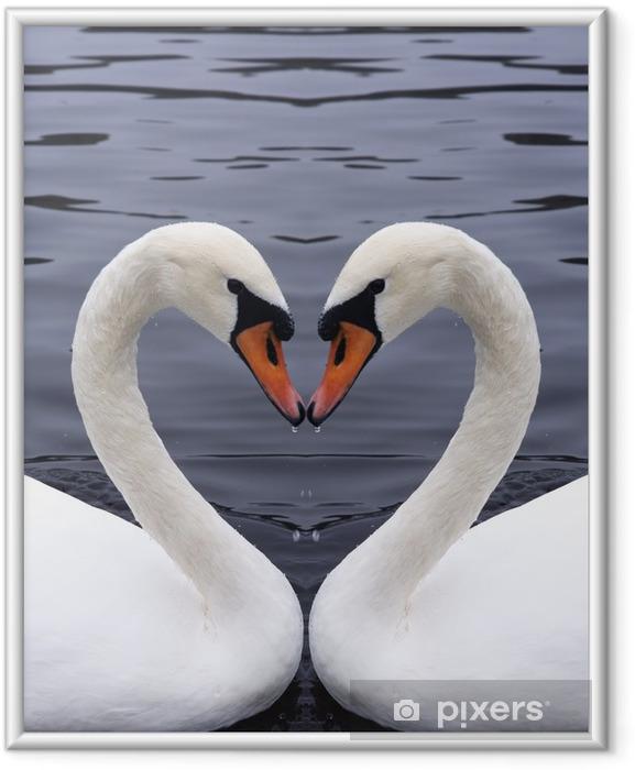 Ingelijste Poster Zwanen hart - Zwanen