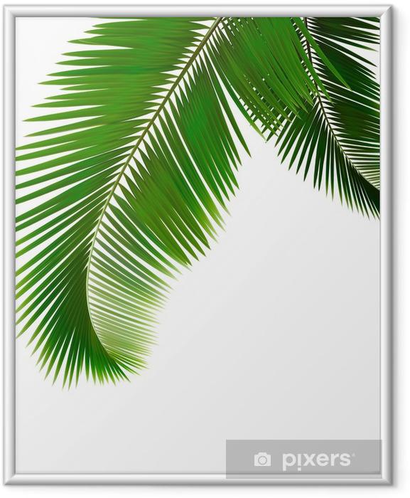 Póster Enmarcado Hojas de palmera sobre fondo blanco. Vector. - Árboles y hojas