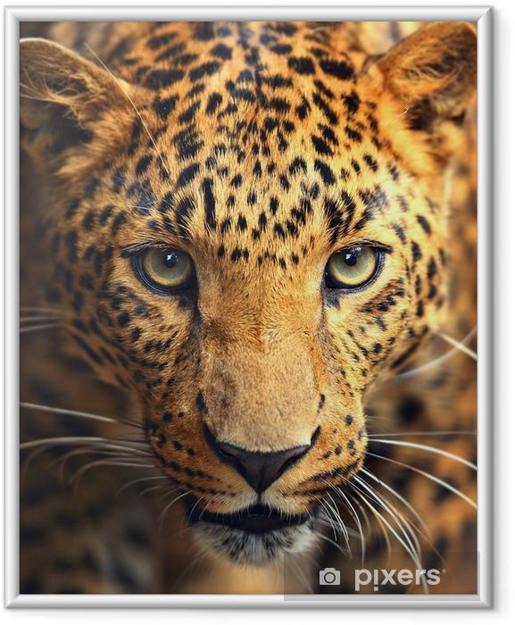 Ingelijste Poster Luipaard portret - iStaging