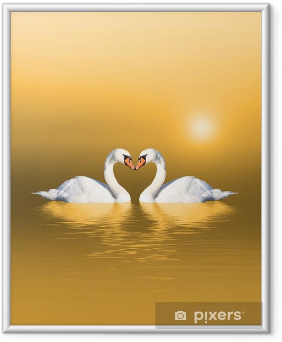 Ingelijste Poster Zwanen bij zonsopgang - Zwanen
