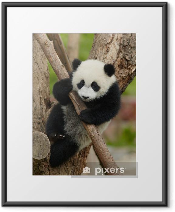 Plakat w ramie Giant Baby Panda na drzewie - Tematy