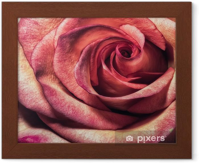 çerçeveli Poster Güzel Sanat çiçek Renk Makro çiçek Portre Bir Tek Izole Renkli Pembe Turuncu Pembe çiçek Açan Bir çiçek Ile Vintage Tarzı Boyama