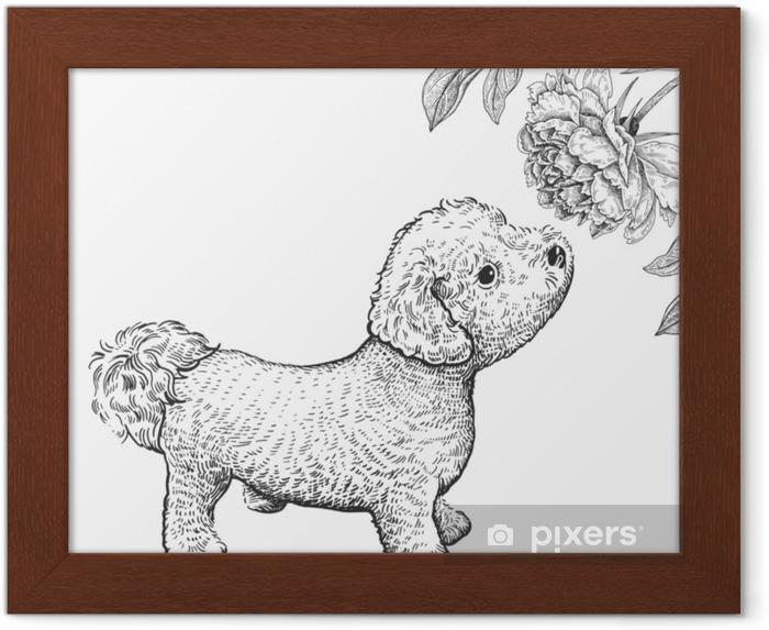 Póster Enmarcado Perro Bishon Lindo Cachorro Olfateando Peonía Flor Dibujo A Mano En Blanco Y Negro
