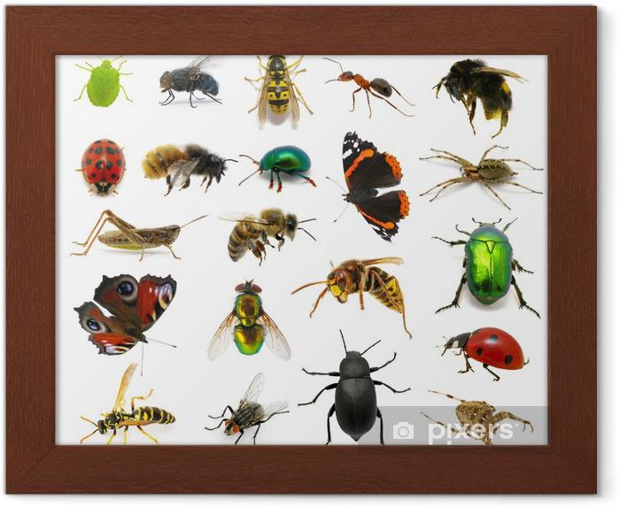 Póster Enmarcado Conjunto de insectos - Otros Otros