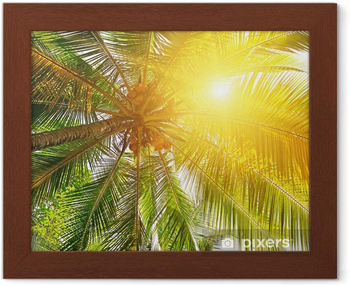 Plakat w ramie Światła słonecznego przez liście palm - Palmy