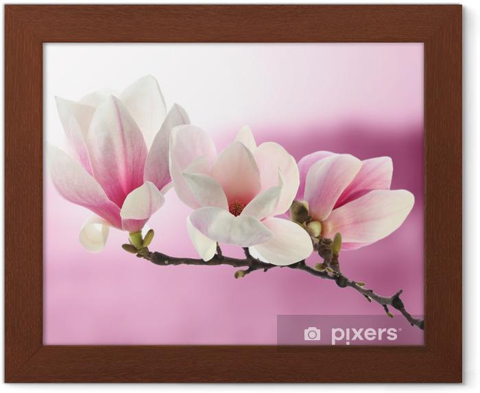 Póster Enmarcado Magnolia - Temas