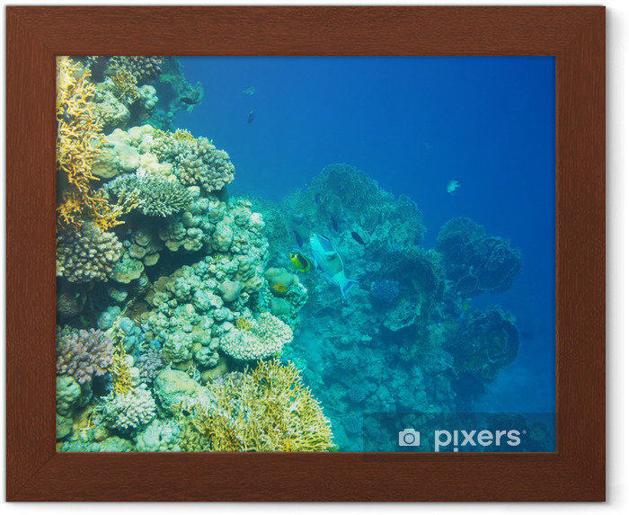 Plakát v rámu Korálový útes - Korálové útesy