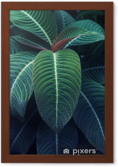 Plakat w ramie Rośliny tropikalne - Rośliny i kwiaty