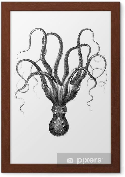 Çerçeveli Poster Ahtapot - Bilim ve doğa