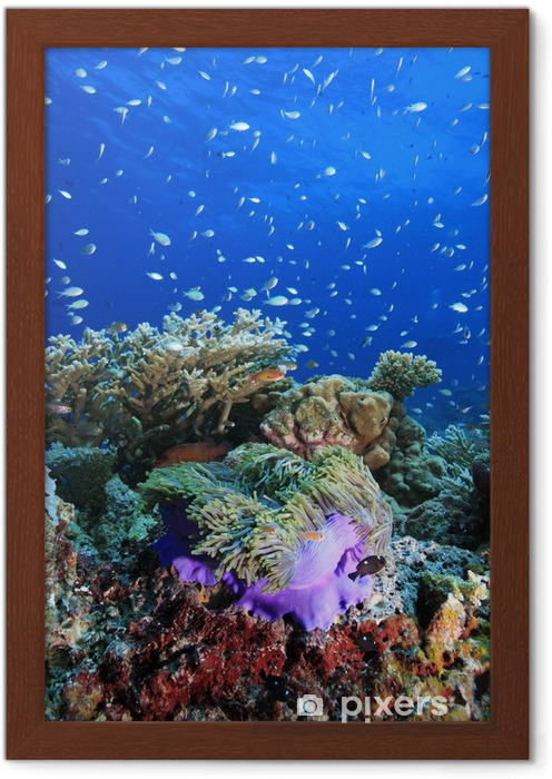 Plakat W Ramie Rafa Koralowa Rafa Koralowa
