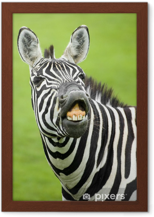Ingelijste Poster Zebra - Thema's