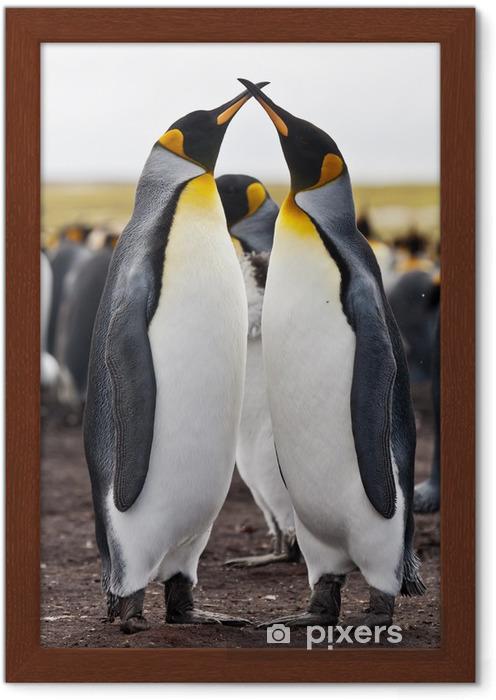 Gerahmtes Poster Paar Königspinguine - Vögel