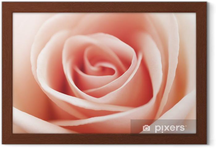Poster en cadre Gros plan de rose - Thèmes