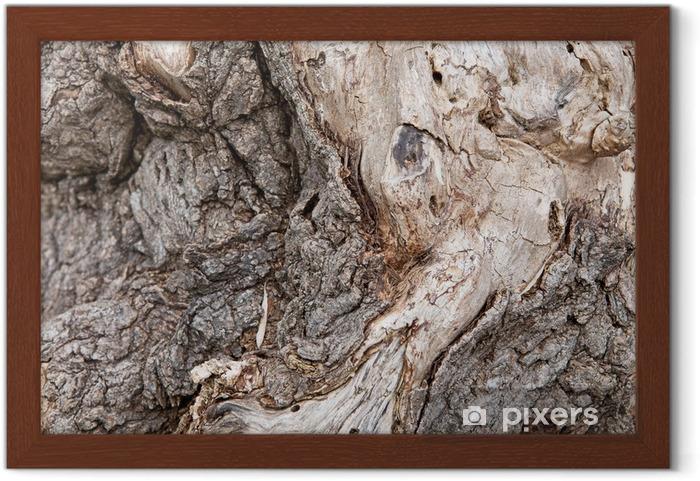 Póster Enmarcado Corteza de árbol - Texturas